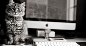 Яндекс меняет метод машинного обучения на CatBoost