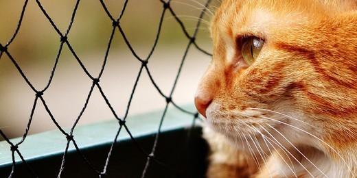 Как привести 6000 посетителей на сайт приюта для животных через Яндекс.Директ